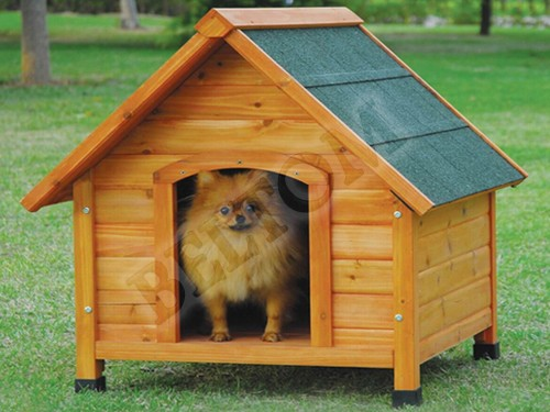 Small Kennel Dog